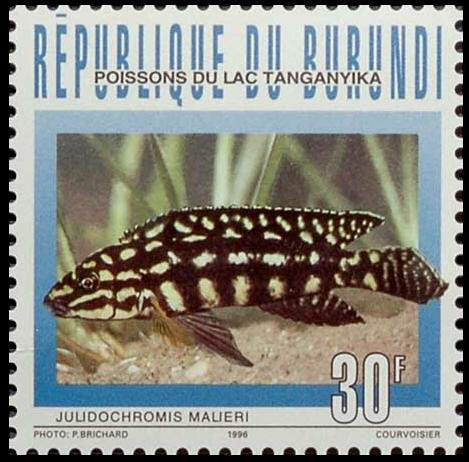 Julidochromis marlieri, stamp of Burundi.