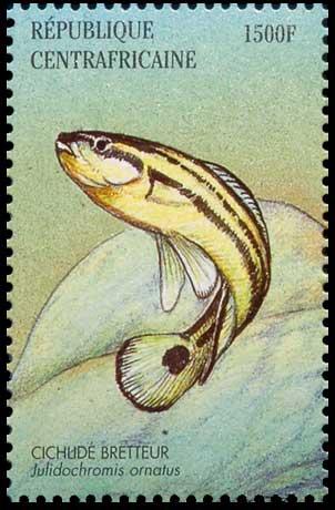 Timbre de République centrafricaine |Julidochromis ornatus | cichlidé bretteur.