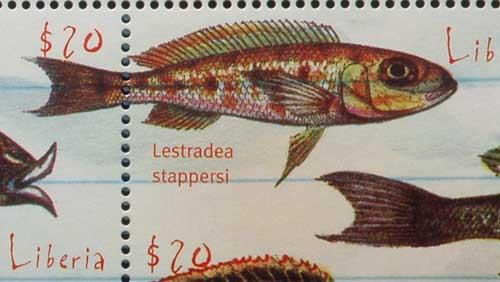 Lestradea stappersi en timbre.