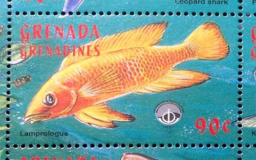 Neolamprologus leleupi | timbre des Iles Grenadines.