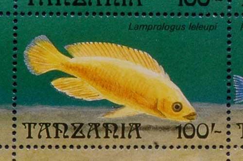 Timbre de Tanzanie représentant Neolamprologus leleupi.