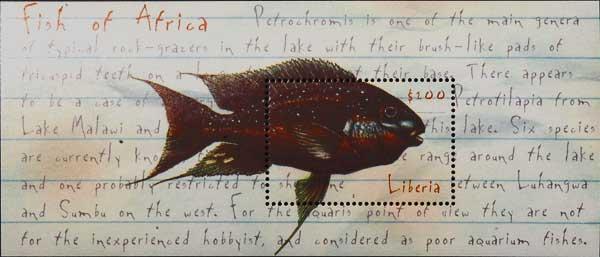 Petrochromis trewavasae.