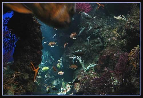 La Rochelle aquarium Méditerranéen