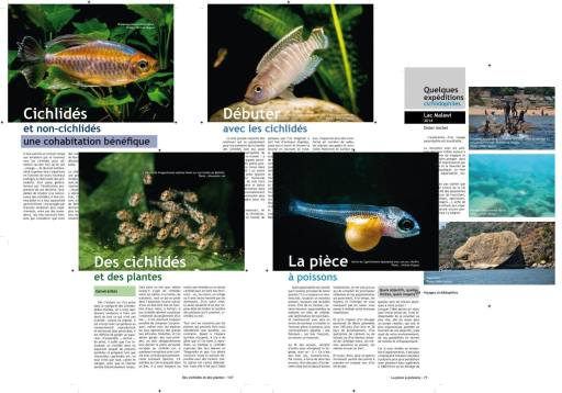 Guides Cichlidés -2-