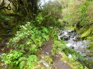 Jours 221 & 222 : Sous la pluie au mont Taranaki…
