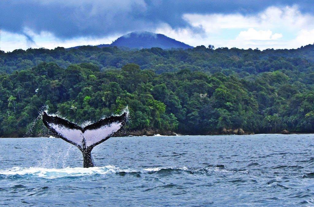 La région de Chocó : berceau de la baleine à bosse