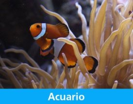 Aquarium dans le parc Explora