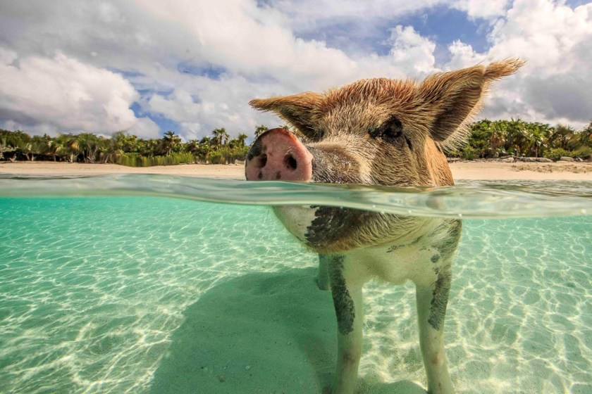 The Ultimate Caribbean Bucket List | 5 Must Do Activities & Experiences