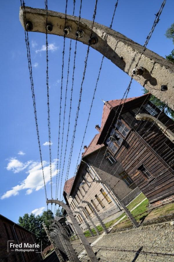 Sujet Auschwitz-12