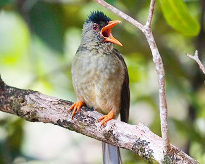 https://i1.wp.com/www.destination360.com/africa/seychelles/images/s/seychelles-bird-watching.jpg