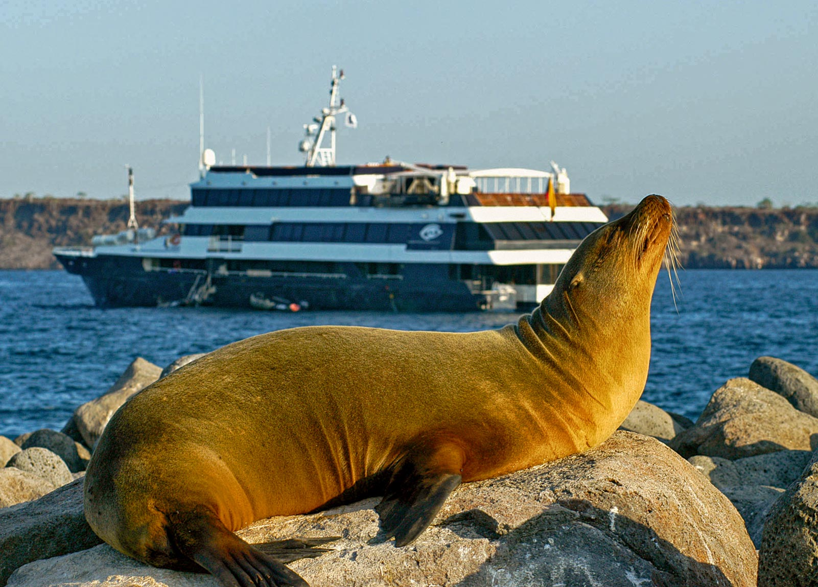 Book A 7 Night Galapagos Cruise And Get A 99 Week In