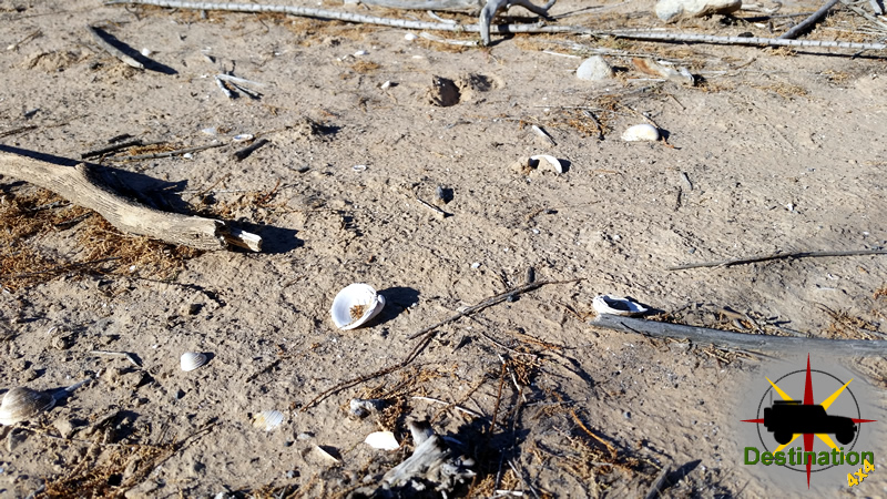 Fresh Water Clam shells litter the area