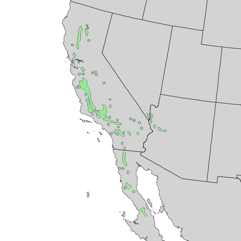 Natural distribution map for Juniperus californica (California juniper) - Elbert L. Little, Jr., of the U.S. Department of Agriculture, Forest Service