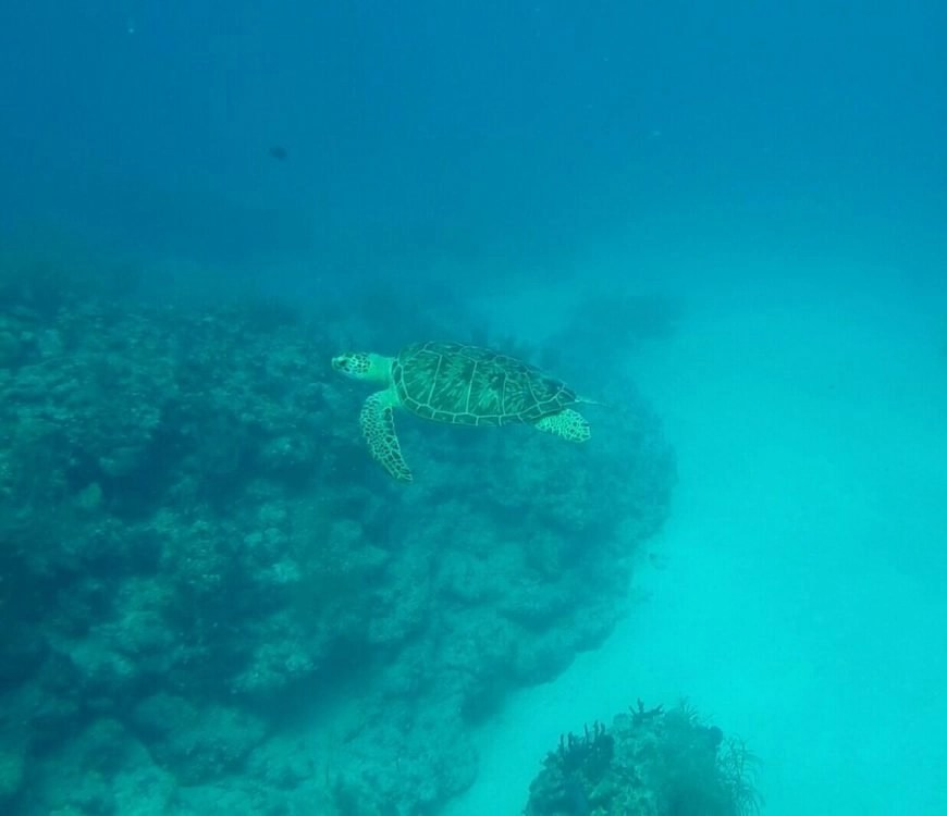 Destination Addict - Diving with a a sea Turtle in Mahahual