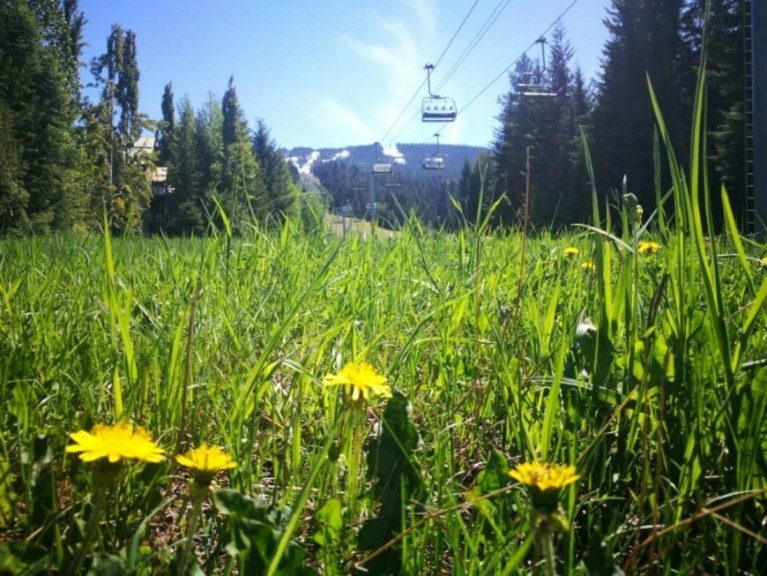 Destination Addict - Turning from Winter to Spring on Blackcomb Mountain, Whistler, Canada