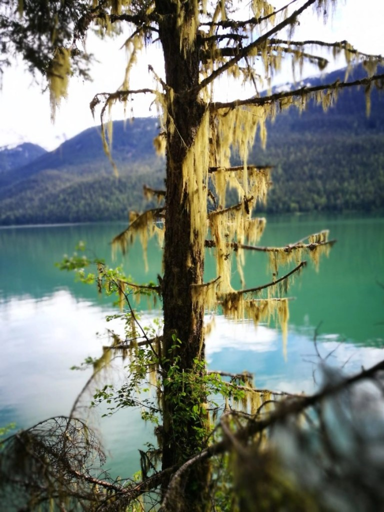 Right alongside Cheakamus Lake - Top 5 Whistler Hikes