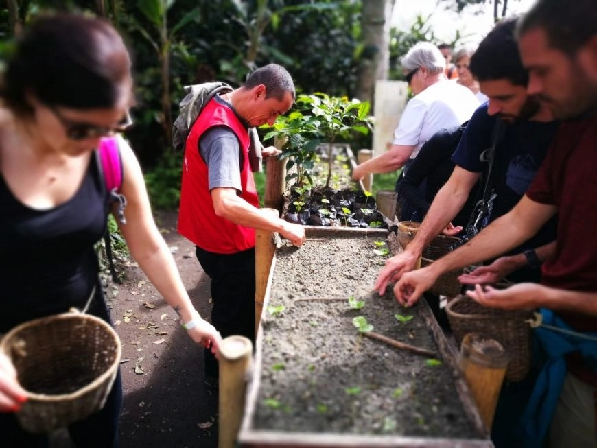 Planting coffee beans on our tour of El Ocaso, Salento, Quindio, Colombia
