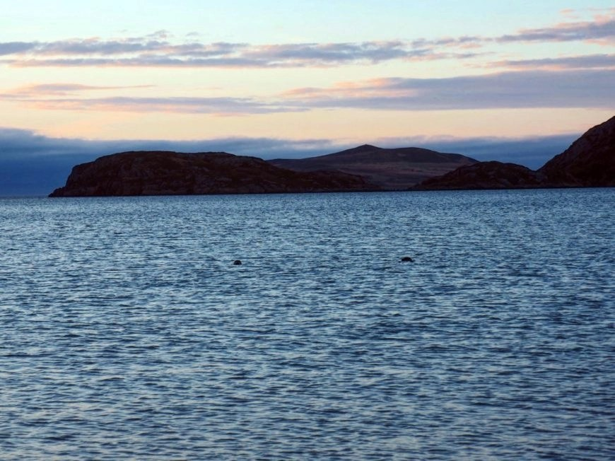 Watching seals play at sunset, NC500 – An Epic Itinerary For Scotland's North Coast - Destination Addict