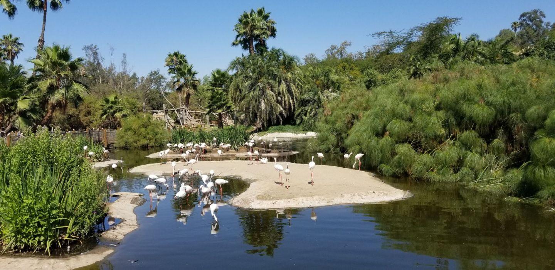 The San Diego Zoo Safari Park