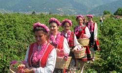 Secretul-uuleiului-de-trandafir-bulgăresc