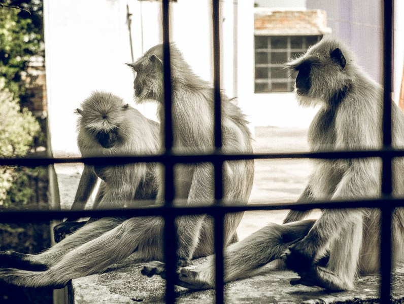 watching monkeys from our window
