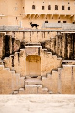 Dog and the Step Well