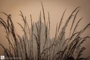 Grass and Taj Mahal silhouette