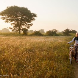 Bicycling at sunrise