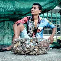 Birds in small cages being sold on Yangon market