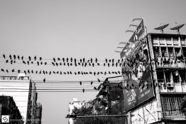 Birds on many wires