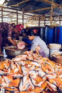 Cleaning fish at fishmarket