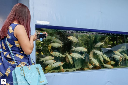 The Simpsons dress and fish