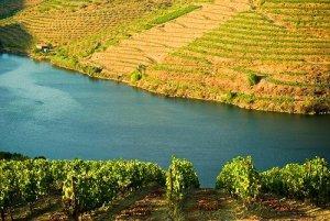 Vindimas no Douro