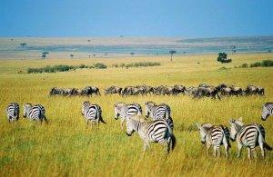 Safari no Quénia e Tanzânia. Autor: Key45 sob licença Creative Commons Attribution 2.0 Generic