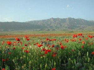 Monte Ararate Visto da Arménia