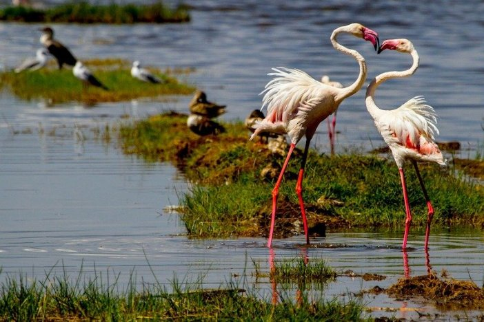 Aves nos parques do Quénia