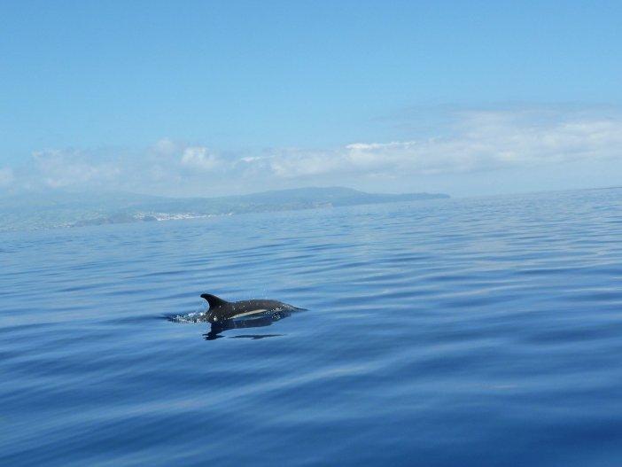 Passeios de barco em Tenerife