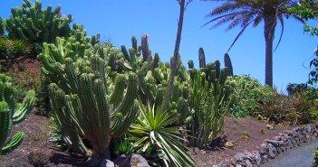 Ilha de Fuerteventura