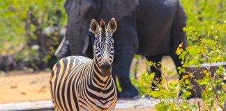 O que visitar na África do Sul