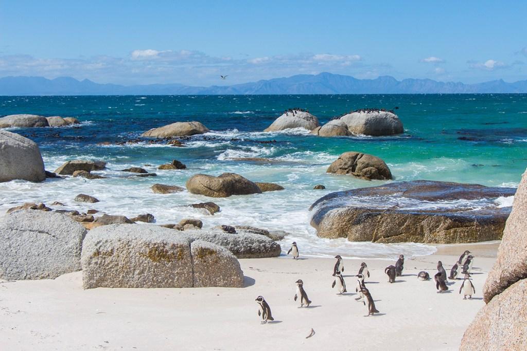 O que fazer na Cidade do Cabo: Boulders Beach