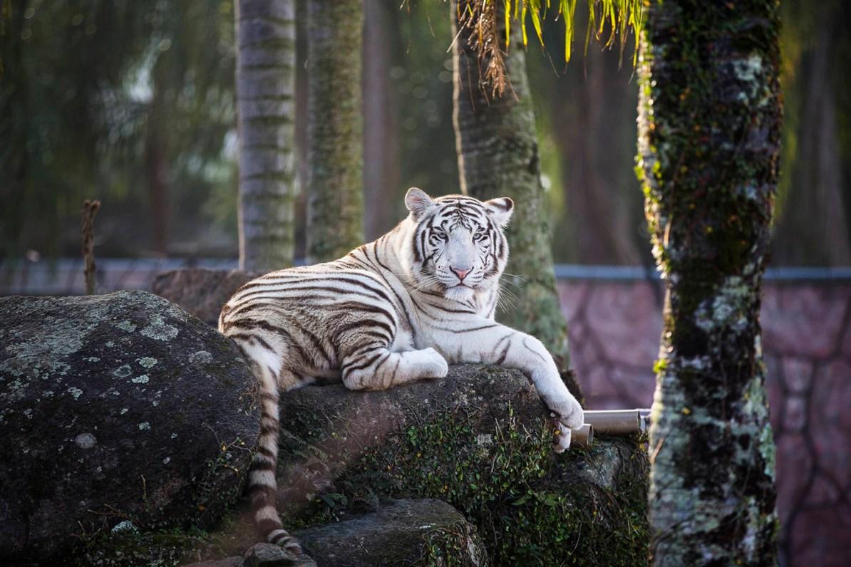 Beto Carrero - Zoo