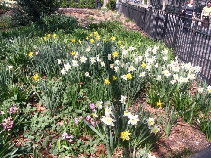 Flores nos canteiros