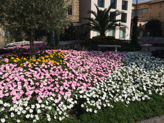 Flores por toda parte