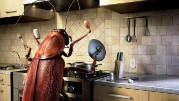cockroach-chef