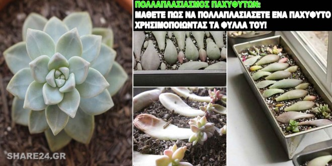 pollaplasiasmos-pachyfyton-apo-ta-fylla-1466-cover2-660x330