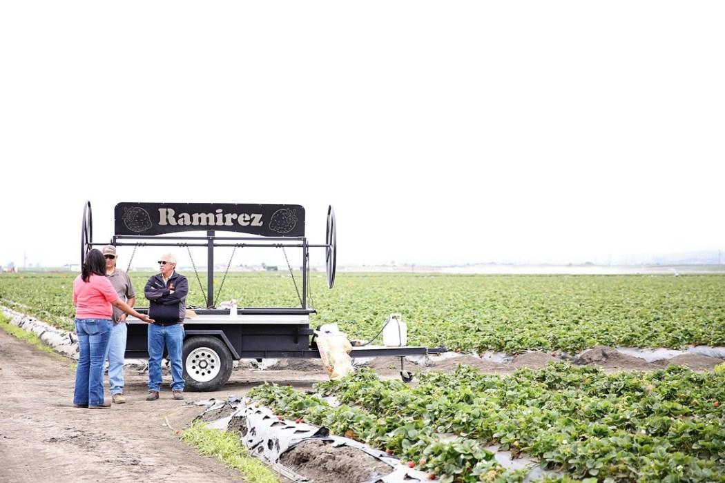 strawberry farm workers