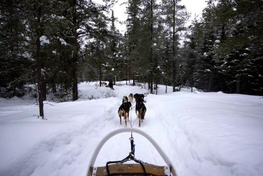 Hundeschlittenfahren Kanada 2