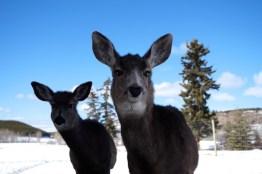 Tiere Yukon