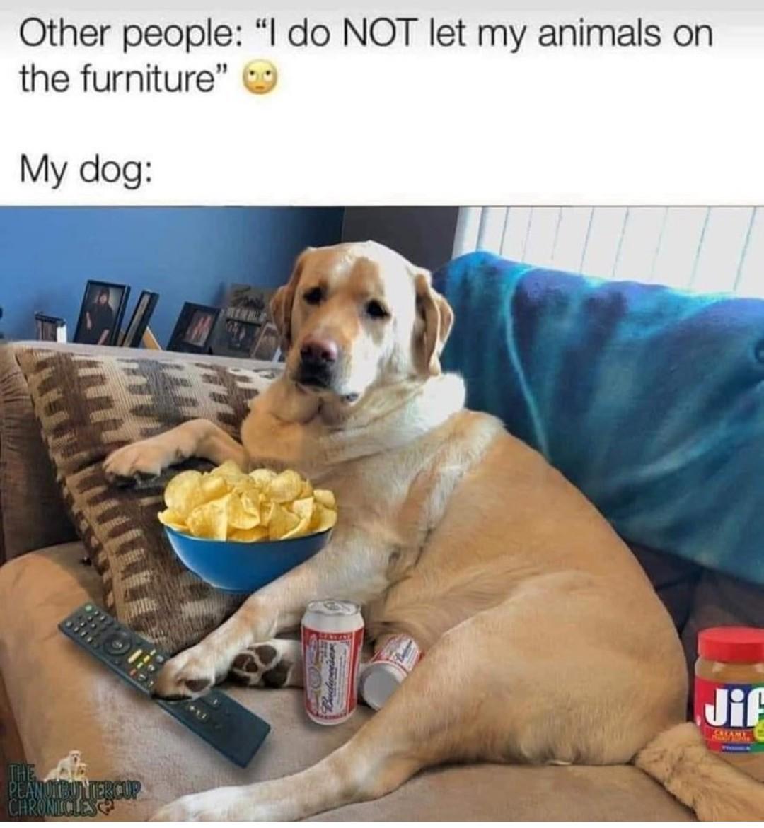 Dog meme daily