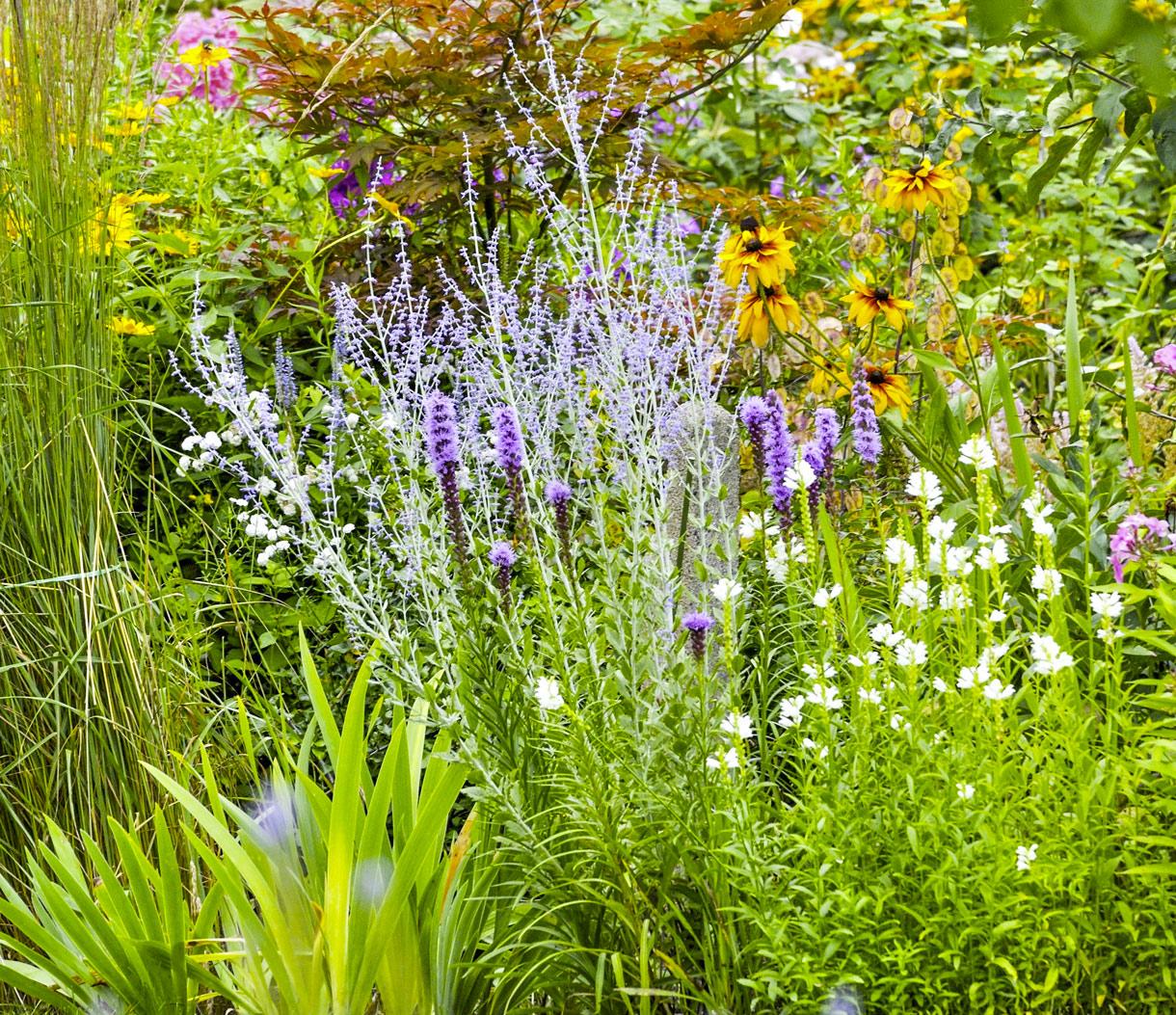 haie fleurie toute l annee arbuste a fleur et graminees detente jardin